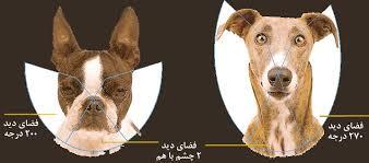 بویایی و چشایی سگ ها
