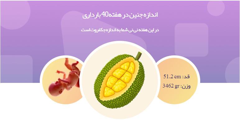 وضعیت جنین در هفته 40 بارداری1