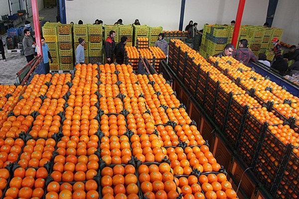 سهمیه میوه شب عید در بازار رشت