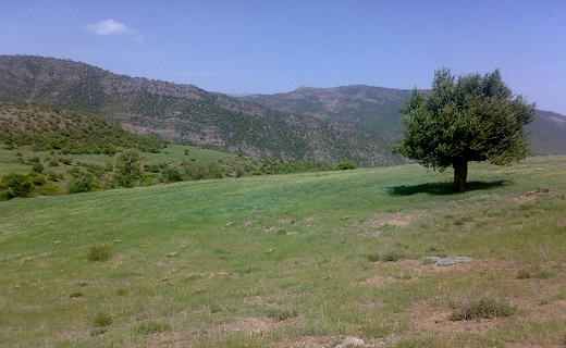 جنگل رودبارک مهدیشهر