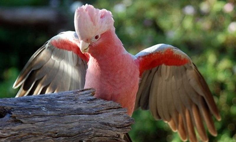 فرمانده یگان حفاظت محیطزیست استان اصفهان خبر داد کشف 43 پرنده وحشی قاچاق در اصفهان