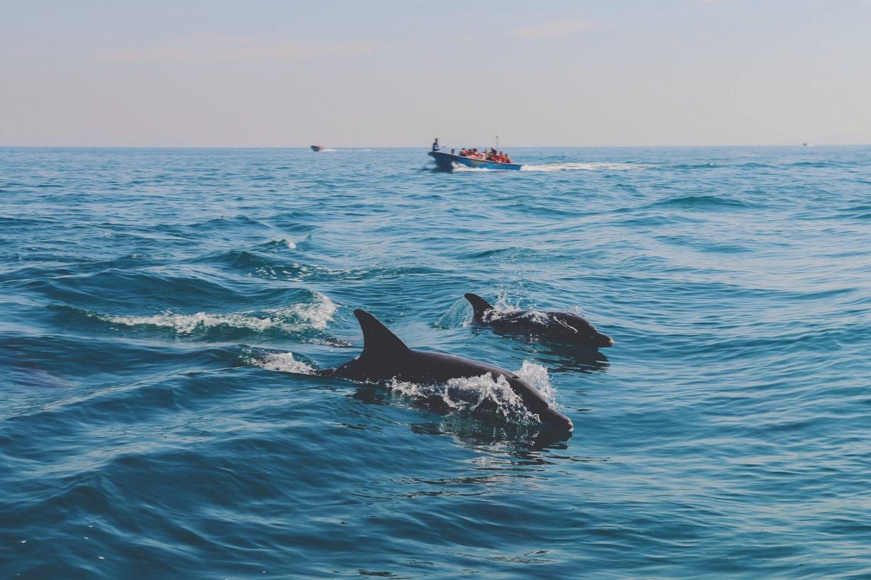 دلفینهای جزیره قشم