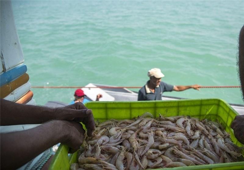 صادرات 19 هزار تن میگو به خارج از کشور
