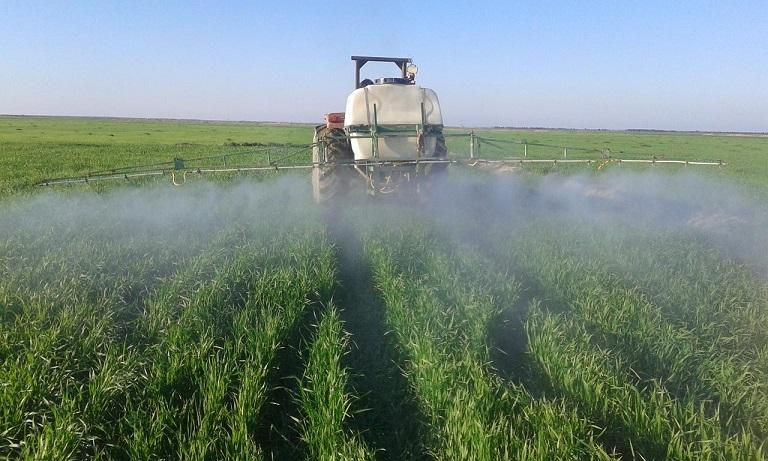 سمپاشی 95 درصد از مزارع گندم جوانرود