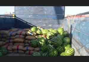 جاساز تریاک زیربار میوه