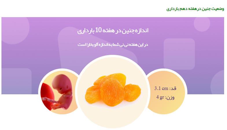 وضعیت جنین در هفته دهم بارداری121