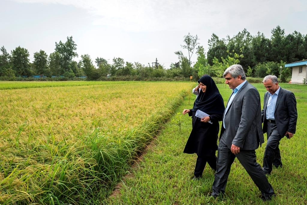 جلسه کمیته تخصصی برنج و بررسی واردات غیر رسمی