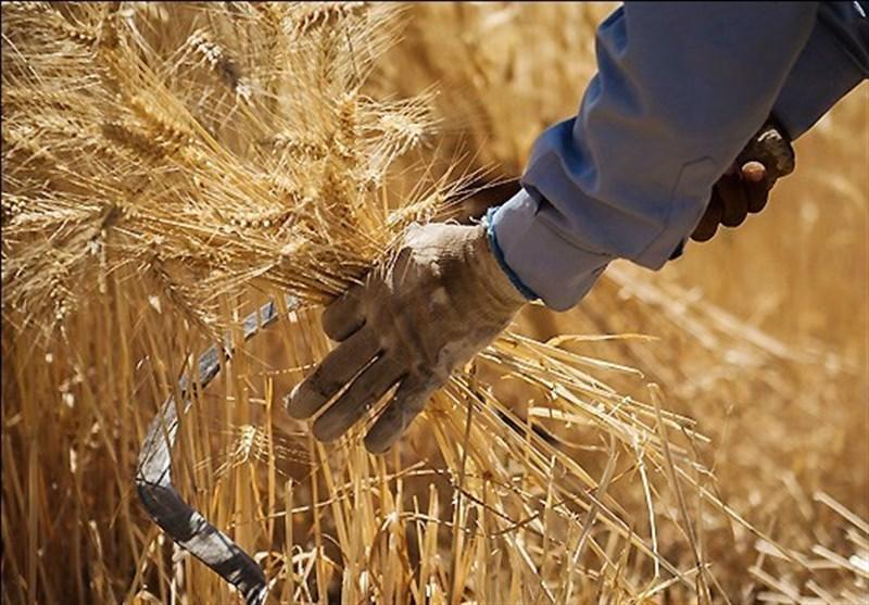 عدم رضایت کشاورزان از قیمت خرید تضمینی گندم