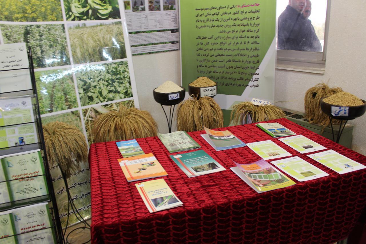 آیین رونمایی از بذور گواهی شده ارقام برنج بومی گیلان برگزار شد