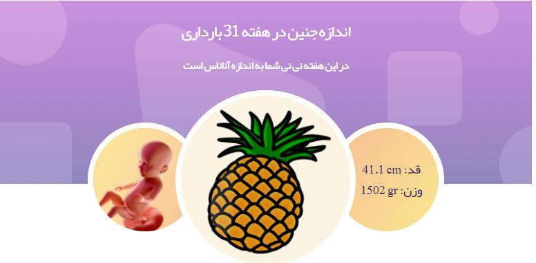 1وضعیت جنین در هفته 31 بارداری