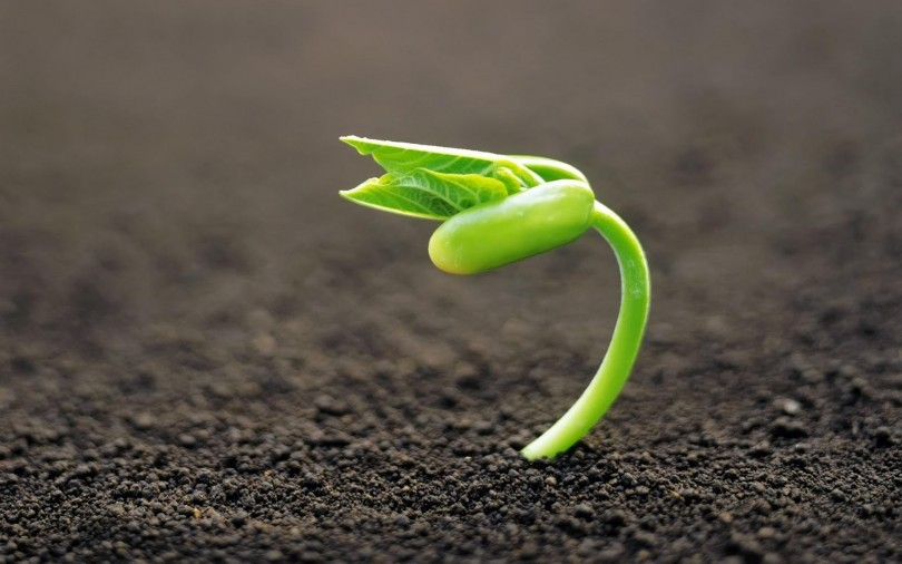 راه نجات بذر انتقال به بخش خصوصی است