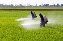 مبارزه با پوره سن غلات در اراضی کشاورزی شهرستان بهار