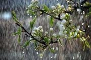 وزش باد شدید و رگبار باران در ۱۲ استان کشور طی امروز