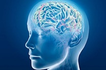 کامل ترین نقشه قشر خارجی مغز ترسیم شد
