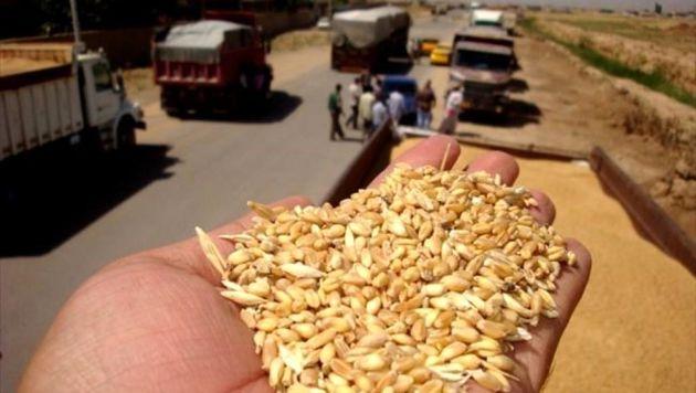 اولین محموله ۳۵ هزار تنی گندم به عمان صادر شد