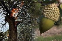نابودی پنج هکتار جنگل صیدون باغملک در کام آتش
