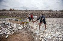 بی خبر از پرورش ماهی در پساب صنعتی کارخانجات هستیم / قاچاق دام به ما ربطی ندارد