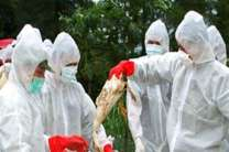 هشدار مدیرکل دامپزشکی مازندران نسبت به احتمال ابتلا به آنفلوآنزای پرندگان