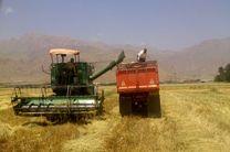 برداشت بیش از یکصد تن جو از مزارع کشاورزی دانشگاه آزاد اسلامی کرمانشاه