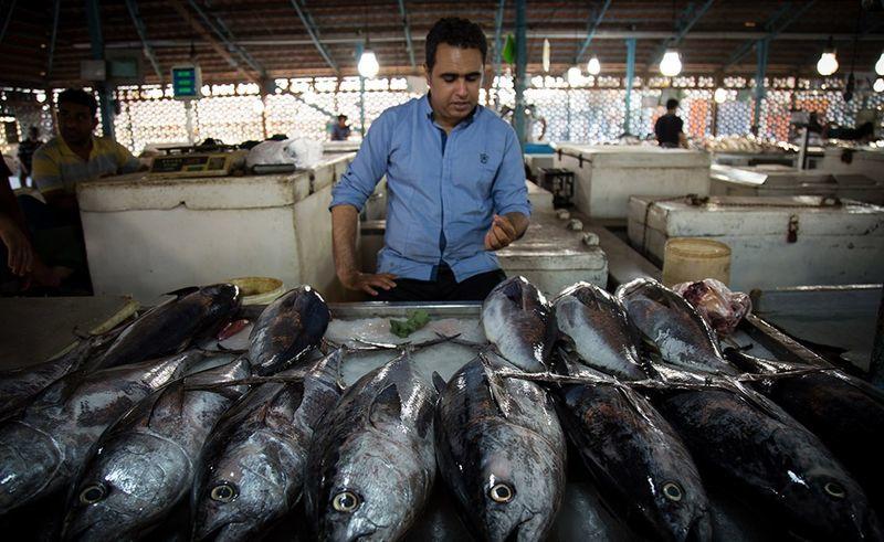عرضهی مستقیم ماهی در بندرعباس/لزوم تامین به موقع گاز خانگی در هرمزگان
