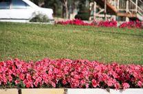 تولید و کاشت بیش از یک میلیون نشای گل فصلی در بندرعباس
