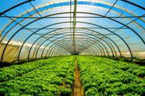 200 هکتار گلخانه تولید محصولات کشاورزی تا شهریور سال جاری در هرمزگان ایجاد می شود
