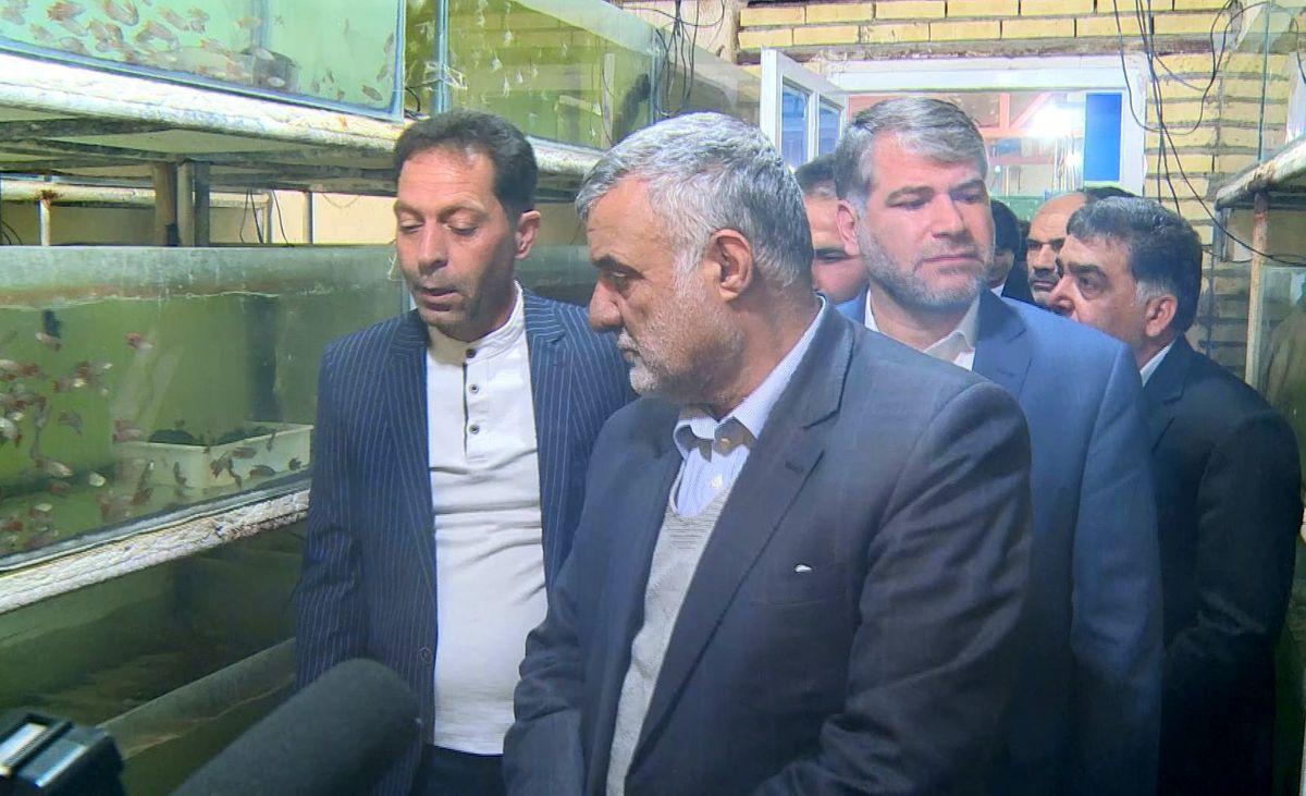 وزیر جهاد کشاورزی از قطب تولید ماهیان زینتی در کاشان بازدید کرد