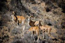 در شبیهسازی گونههای جانوری در حال انقراض سرمایهگذاری می شود