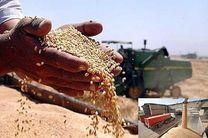 ۱۲۱ هزار تن گندم از کشاورزان کرمانشاهی خریداری شده است