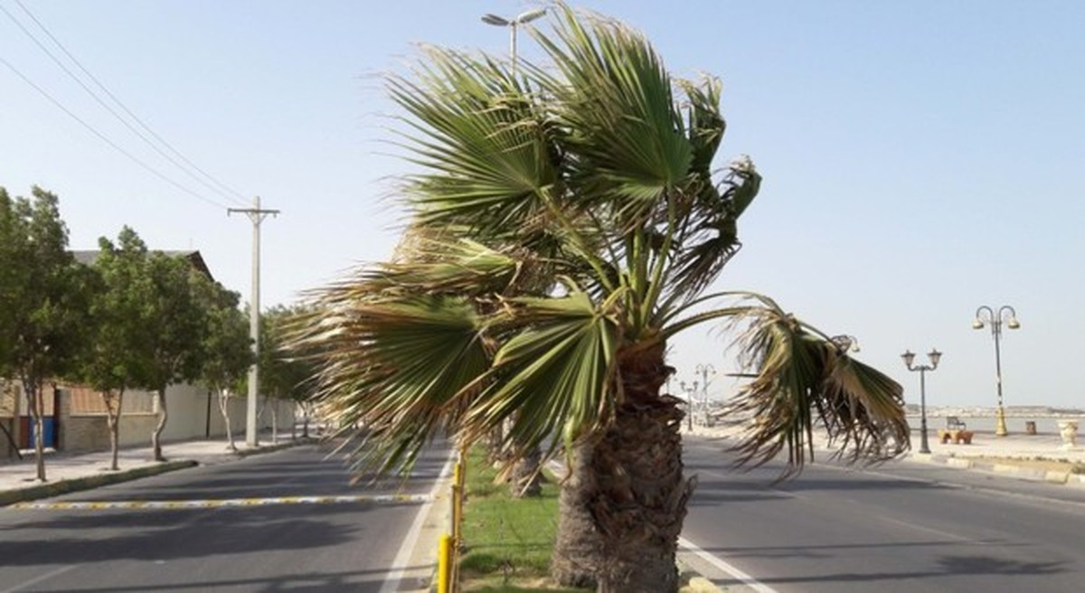 افزایش سرعت باد و گرد و غبار در مناطق شرقی و جنوب شرقی هرمزگان