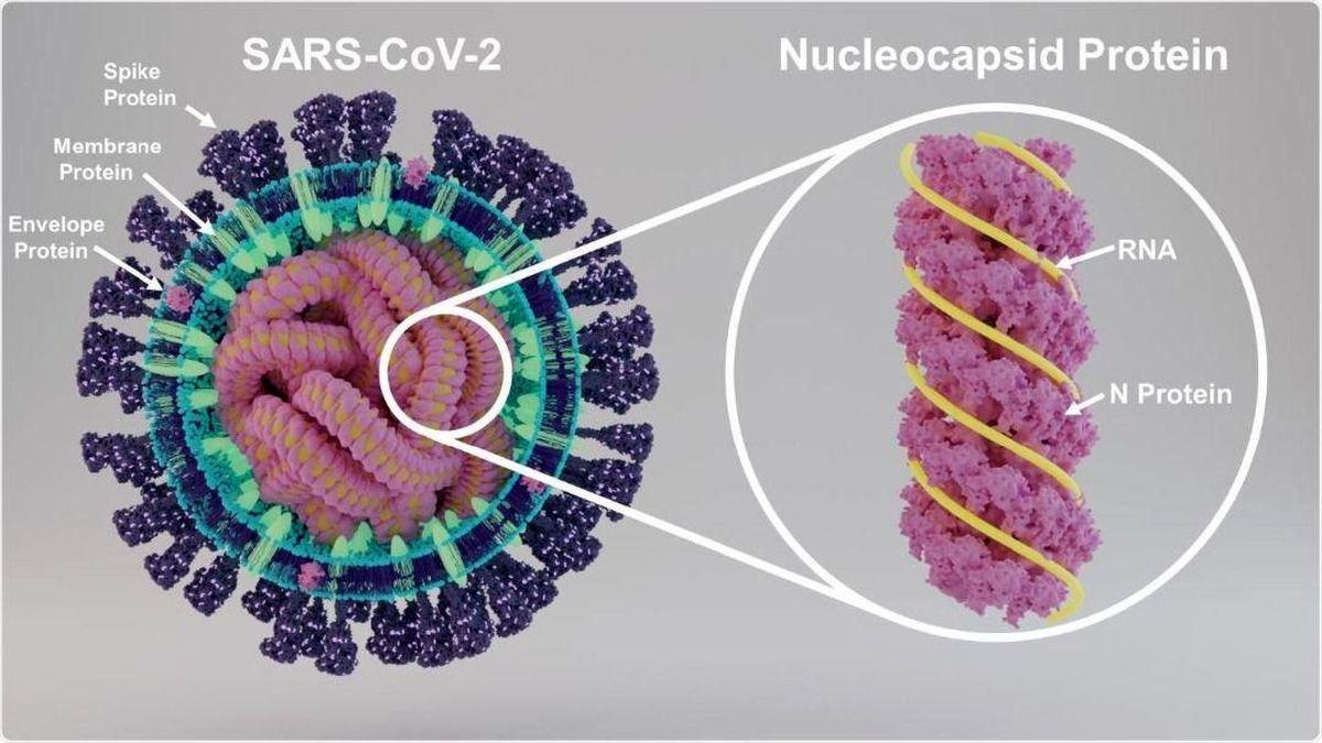 دست یابی به شکلی جدید از پروتئین های ویروس کرونا توسط محققان دانشگاه صنعتی اصفهان