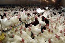 آژیر خطر آنفلوانزای فوق حاد پرندگان در کهگیلویه و بویراحمد به صدا درآمد