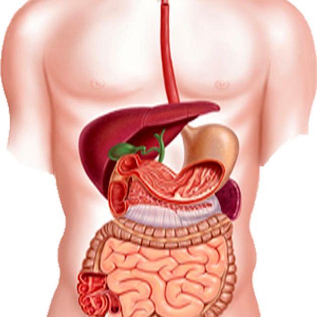 تقویت سیستم گوارشی بدن با استفاده از طب فشاری
