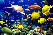 سه مجوز تکثیر و پرورش ماهیان زینتی در هرمزگان صادر شد