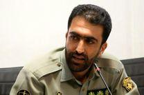 کشف لاشه یک راس قوچ وحشی در یکی از قنادی های تهران