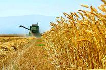 بیش از ۲۰۰ هزار تن گندم از کشاورزان لرستانی خریداری شد