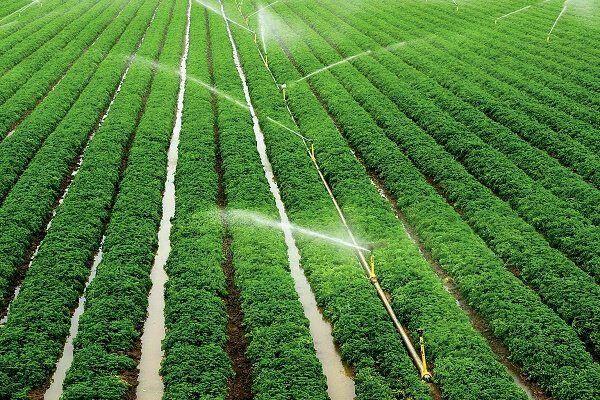 اعطای وام 6 درصدی به کشاورزانی فعال در حوزه گیاهان دارویی