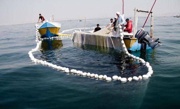 صید بیش از ۲ هزار و ۵۰۰ تن ماهی یال اسبی در سیریک