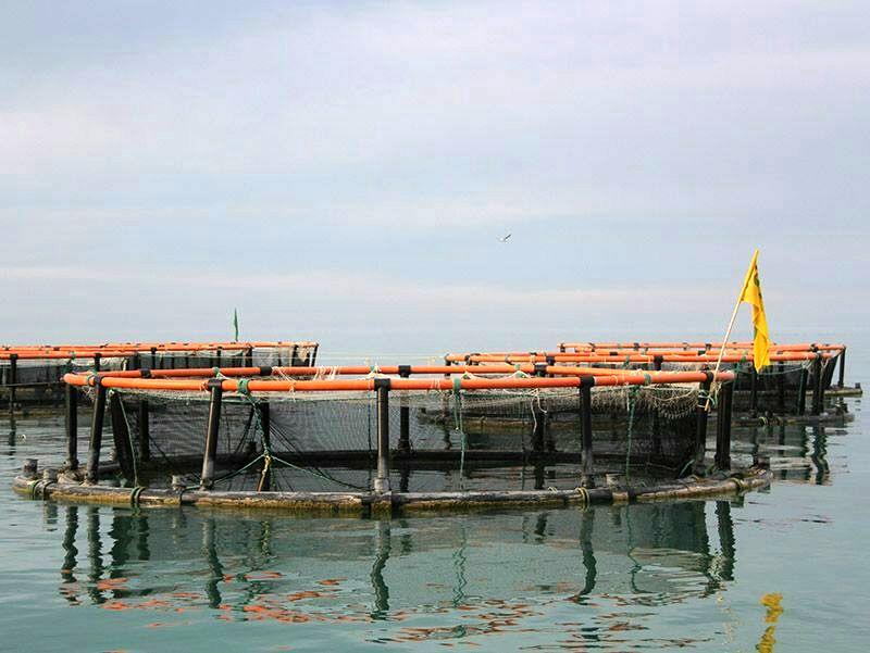 سواحل دریایی بندر ترکمن پتانسیل بالایی در تولید انواع آبزیان دارد