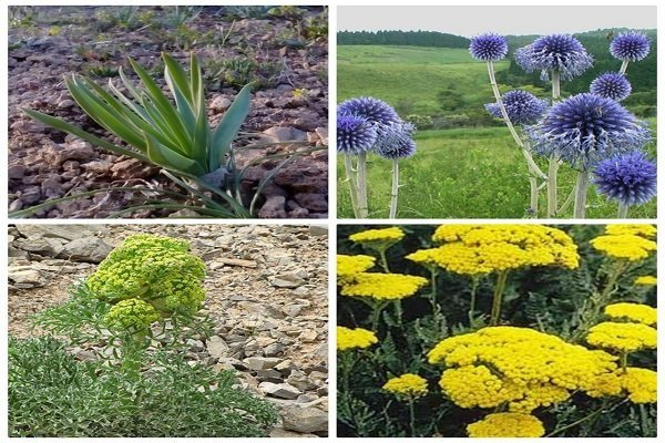 احداث باغ کلکسیون گیاهان دارویی در ایستگاه تحقیقات پاسند بهشهر