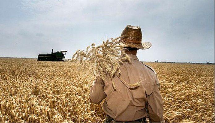 ۶۰ هزار تن گندم از کشاورزان خریداری شد/عدم رضایت کشاورزان از قیمت خرید تضمینی گندم