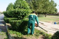 حذف گونه گیاهی آلرژی زا از فضای شهری اهواز