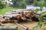 کشف 10 تن چوب جنگلی قاچاق در سیاهکل