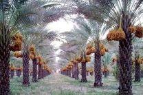 حضور کنسرسیوم صادراتی خرمای خوزستان در نمایشگاه world food روسیه