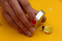 زنبورها و قدرت مغناطیسی عجیب در مسیریابی