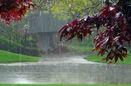 استان های پر بارش طی روز های آینده اعلام شد
