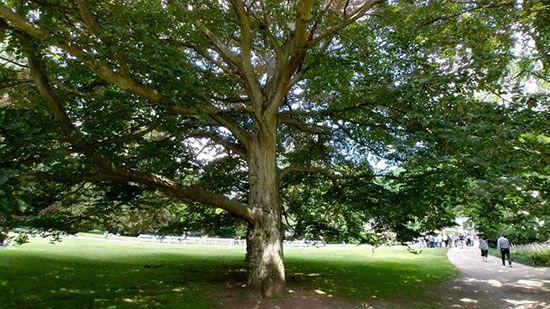 درختی به نام عباس کیارستمی در کارلوویواری