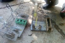فروشنده پرندگان وحشی در فضای مجازی دستگیر شد