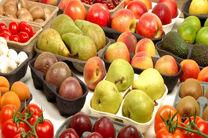 اجرای طرح صادرات محصولات کشاورزی در بسته بندی های استاندارد