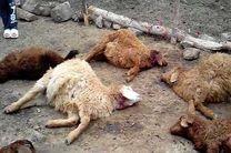 پلنگ آفت جان گوسفندان سندرک